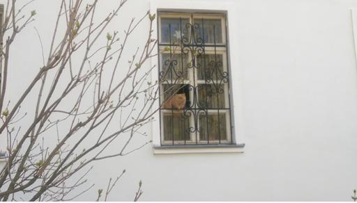 кот из окна